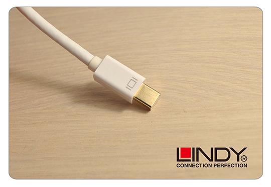 LINDY 林帝 主動式 mini DisplayPort 轉 DVI-D 轉接器 (41733) 02
